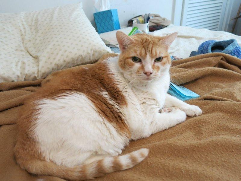 Teresa's cat Leelee