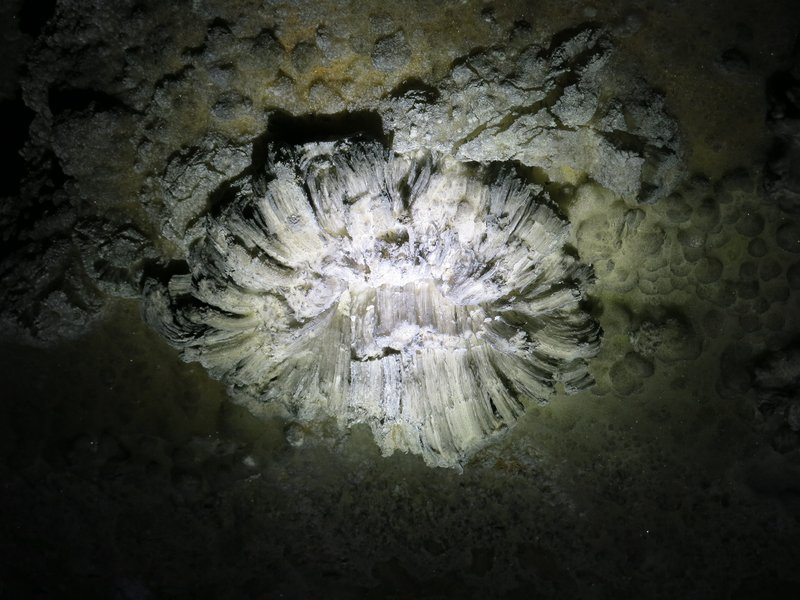 Gypsum flower