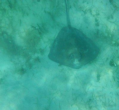 under water St John 2013 090