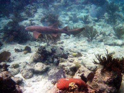 under water St John 2013 118