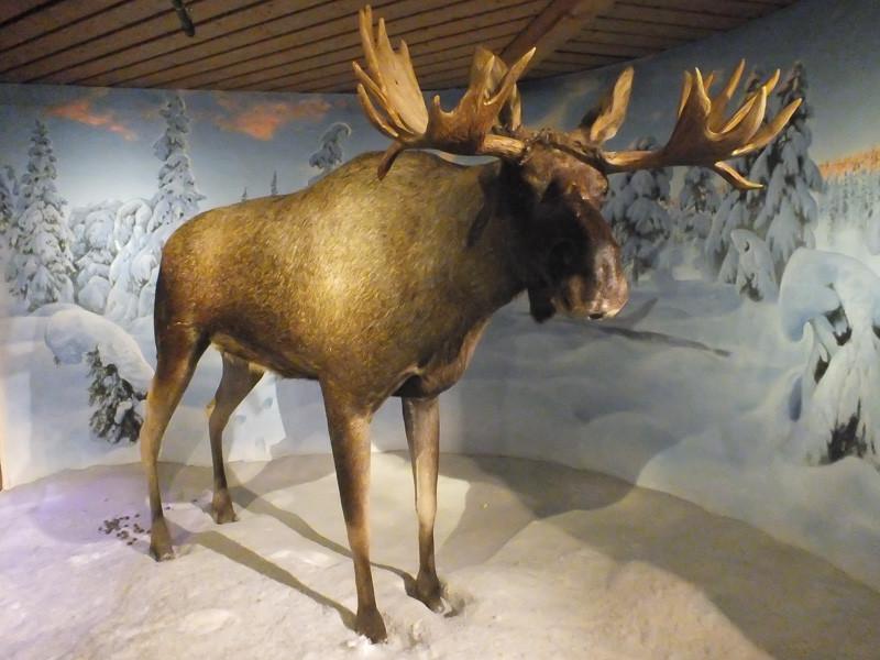 Elch im Skimuseum am Holmenkollen