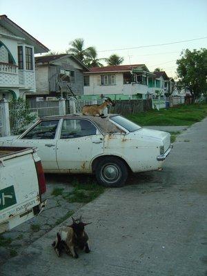 Guyana GT 5