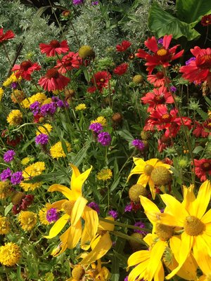 Flowers at La Mairie