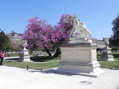 Jardin_des_Tuileries7.jpg