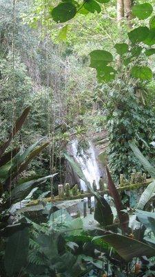 Xilitla_Ed..s_waterfall.jpg
