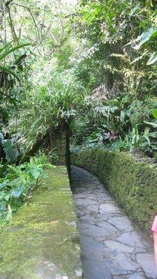 Xilitla garden jungle