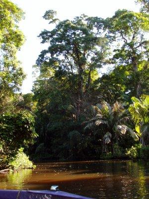 Inside the Tortuguero lagoon
