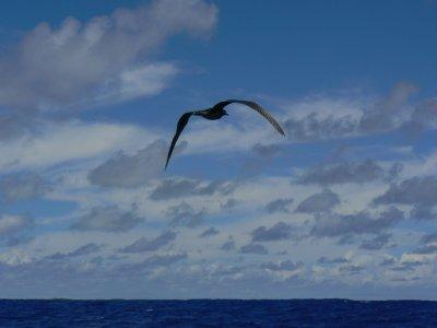 Pitcairn_Islands_092.jpg