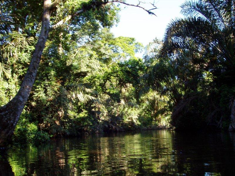 Tortuguero lagoon