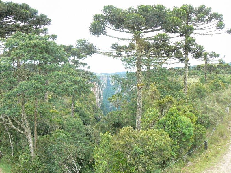 Canyon Itaimbezinho magicaly ends