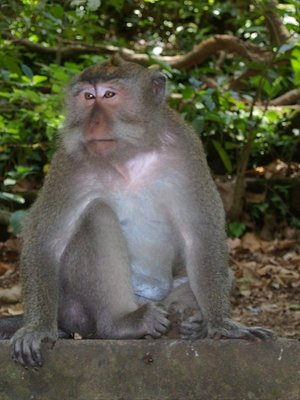 Ubud Monkey Forest Bali Indonesia