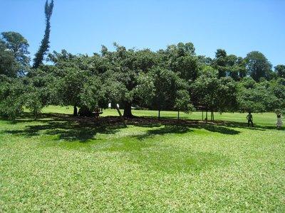2015-04-14 Kandy - Peradeniya botanical garden 022