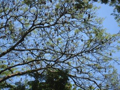 2015-04-14 Kandy - Peradeniya botanical garden 023