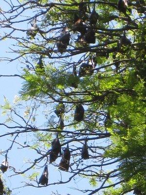 2015-04-14 Kandy - Peradeniya botanical garden 024