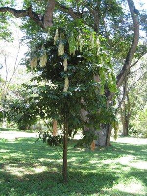 2015-04-14 Kandy - Peradeniya botanical garden 025