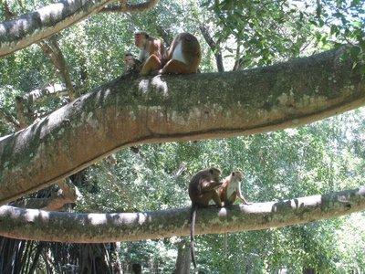 2015-04-14 Kandy - Peradeniya botanical garden 026