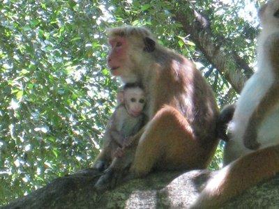 2015-04-14 Kandy - Peradeniya botanical garden 027