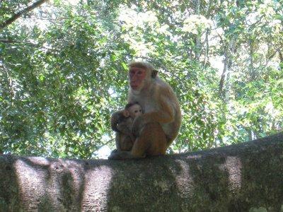 2015-04-14 Kandy - Peradeniya botanical garden 028
