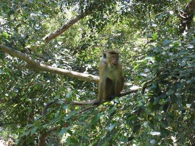 2015-04-14 Kandy - Peradeniya botanical garden 029