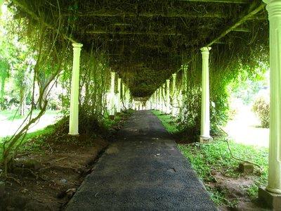 2015-04-14 Kandy - Peradeniya botanical garden 036