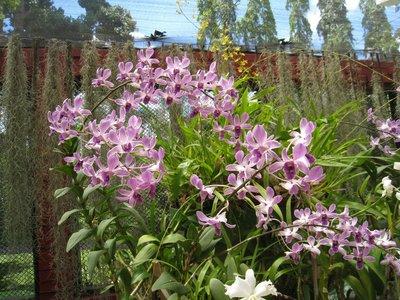 2015-04-14 Kandy - Peradeniya botanical garden 039