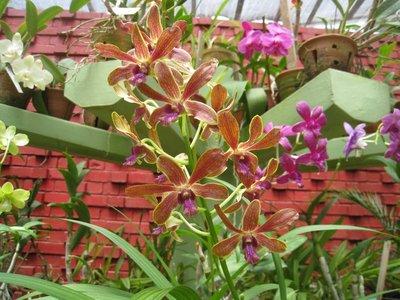 2015-04-14 Kandy - Peradeniya botanical garden 042