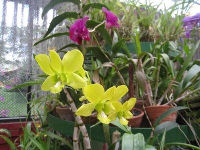 2015-04-14 Kandy - Peradeniya botanical garden 044