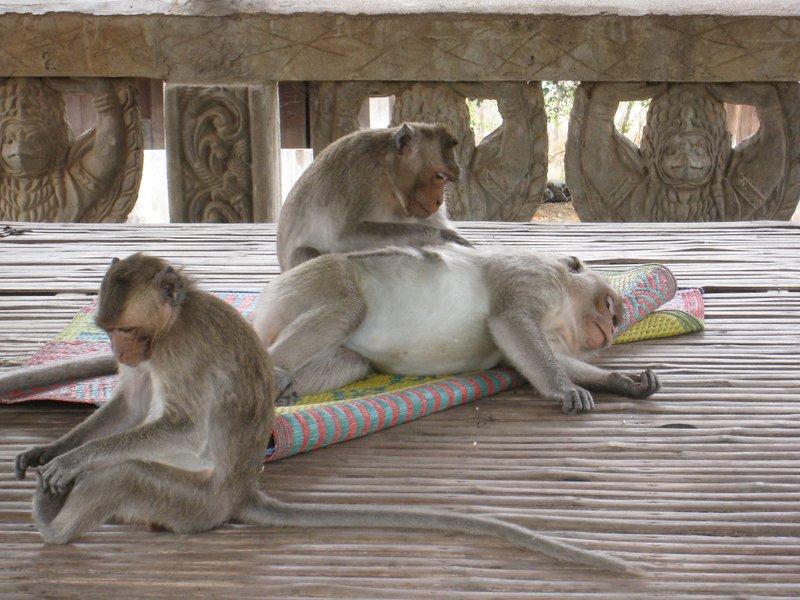 2015-03-07 Kampong Thom - Tao Temple 032