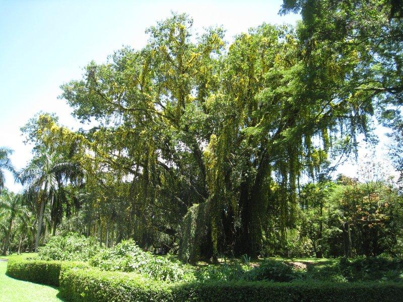 2015-04-14 Kandy - Peradeniya botanical garden 031