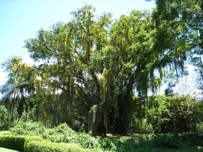 2015-04-14 Kandy - Peradeniya botanical garden 032