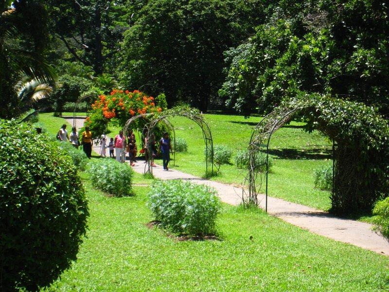 2015-04-14 Kandy - Peradeniya botanical garden 034