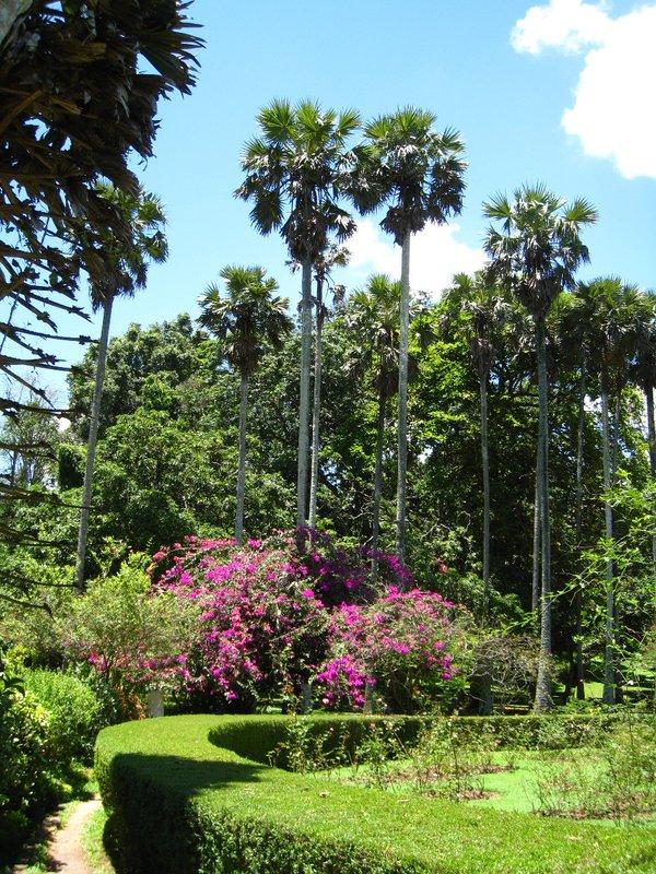2015-04-14 Kandy - Peradeniya botanical garden 035