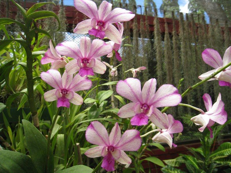 2015-04-14 Kandy - Peradeniya botanical garden 040