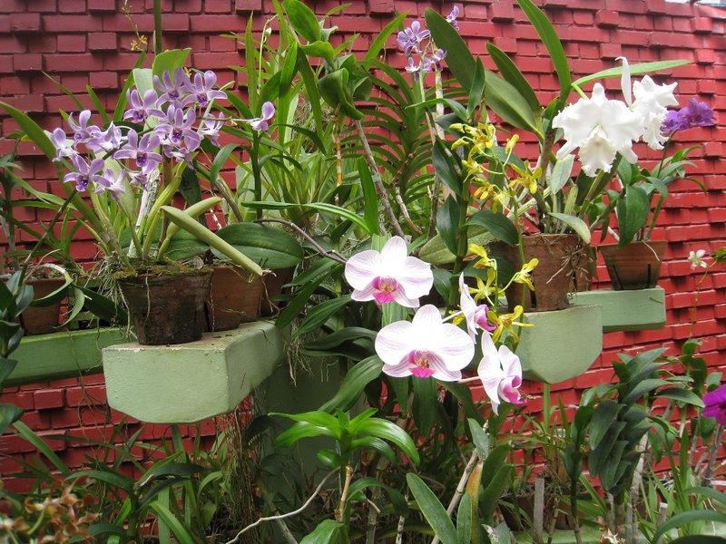 2015-04-14 Kandy - Peradeniya botanical garden 041