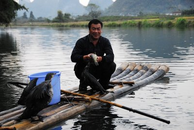 Cormorants fishing, Yulong River