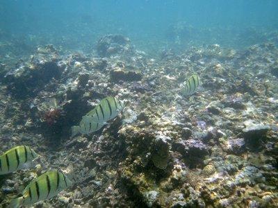 So many pretty fish