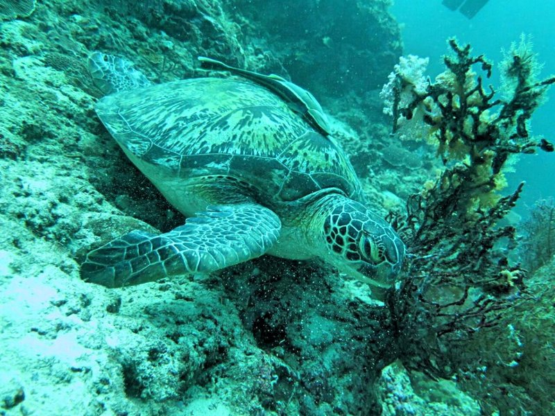 LOVE sea turtles! (photo credit to Sim Xing Zhong)