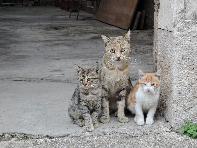 Cats in Ston