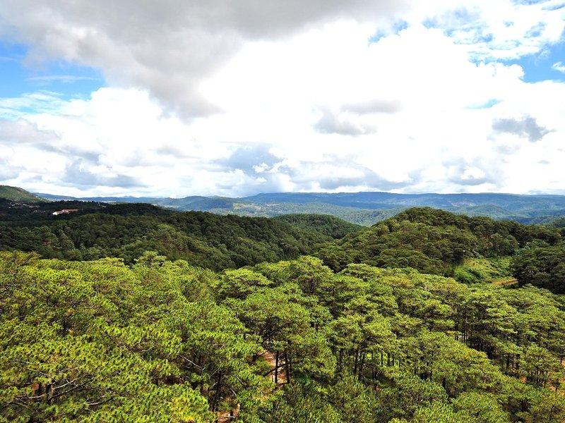 forest in Dalat