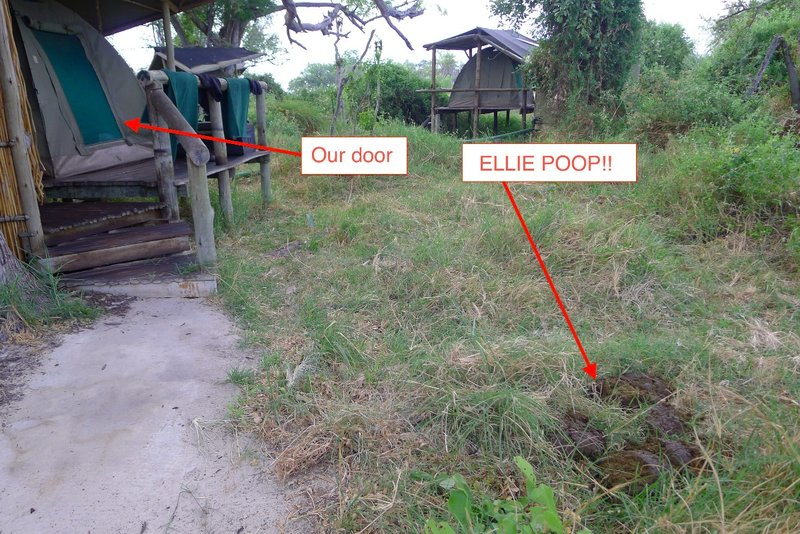 large_elliecamppoop_copy.jpg