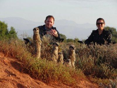 meerkats-cover.jpg