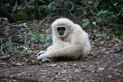 monkeyland.jpg