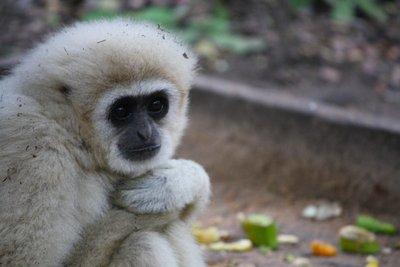 monkeyland2.jpg