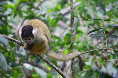 monkeyland3.jpg