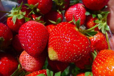 strawberry4.jpg