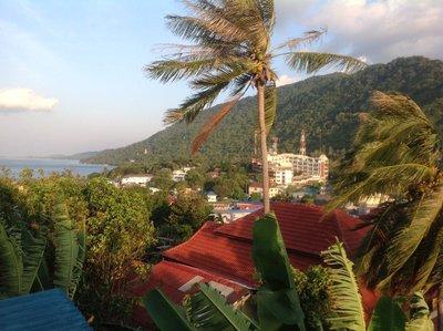 Coconut Tree in Koh Phangan