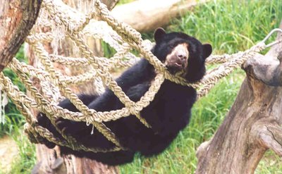 Relaxing bear at the Schonbrunn Tiergarten Zoo