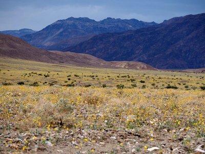 Desert_gol..th_Valley_1.jpg