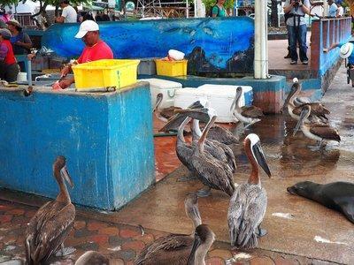 Puerto_Ayora_fish_market.jpg