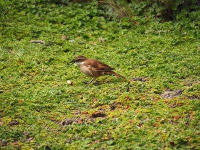 bird_hunting_2.jpg